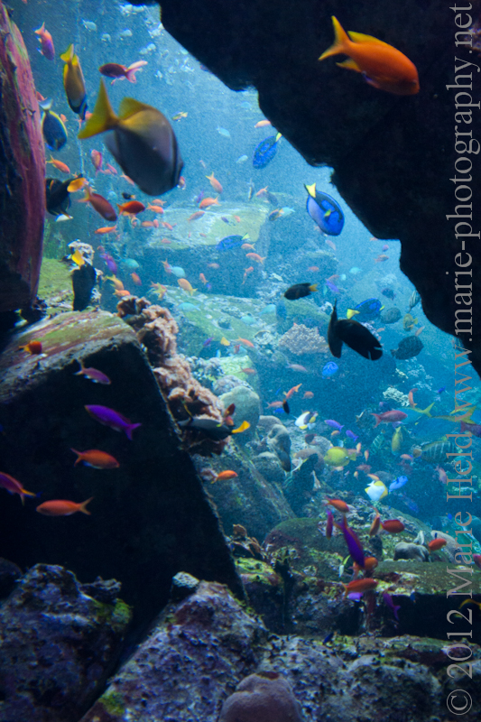 Colourful aquarium at the hotel Atlantis.