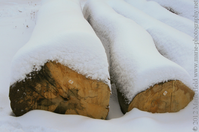Tree trunks covered in a blanket of snow near Steigerthal.