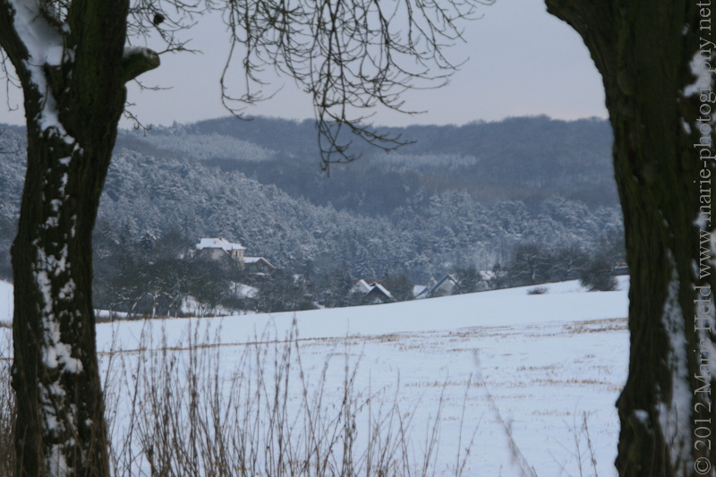 Sleepy village Steigerthal in the snow viewed from a nearby field path lined by apply trees.